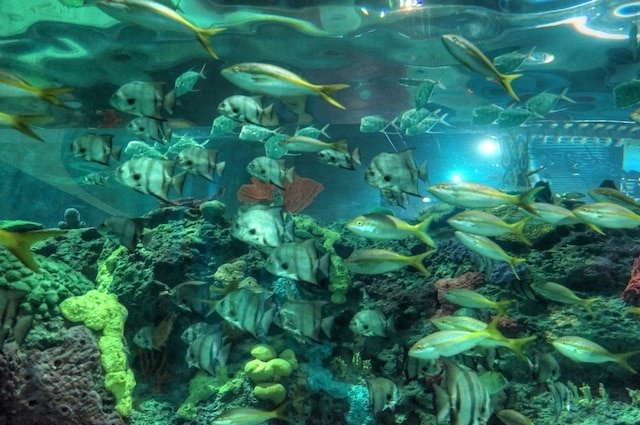 Ripley's Aquarium of Canada Opening
